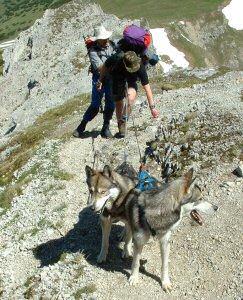 Huskies am Gaishorn